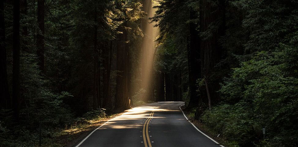 Dark road in the woods with the sun shining through.